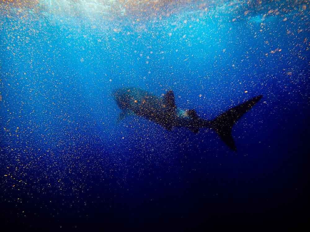 Spyrides_Kyle_Ningaloo_Reef_Sal_Salis.13.5.2016P5111000.jpg