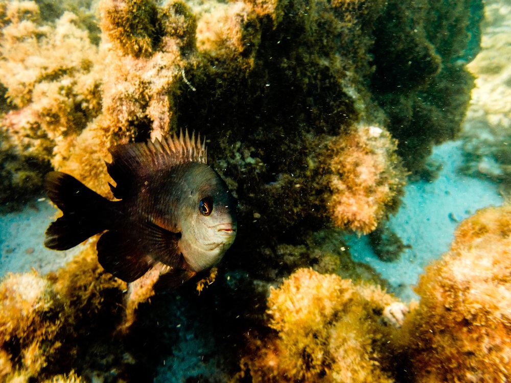 Spyrides_Kyle_Ningaloo_Reef_Sal_Salis.13.5.2016P5111083.jpg