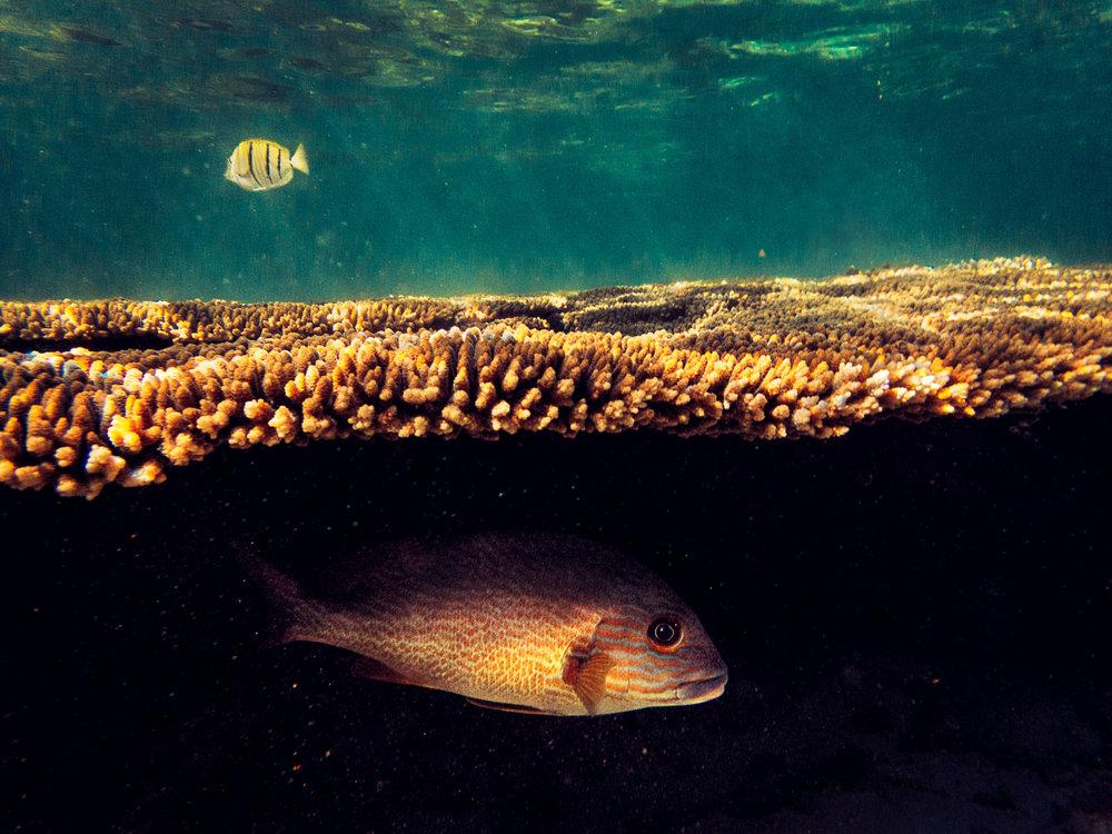Spyrides_Kyle_Ningaloo_Reef_Sal_Salis.13.5.2016Spyrides_Kyle_Fish_Hiding_1_P5142116.jpg