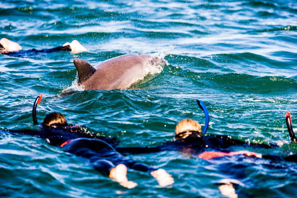 Spyrides_Kyle_Dolphin_Swimming_Rockingham_DSC2826.jpg