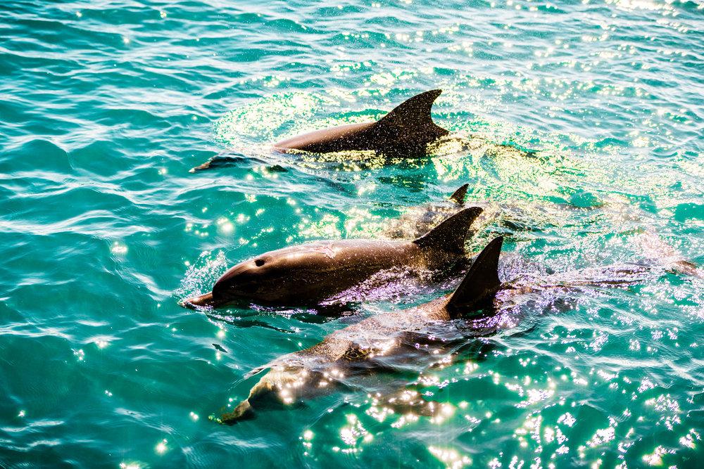 Spyrides_Kyle_Dolphin_Swimming_Rockingham_DSC2820.jpg
