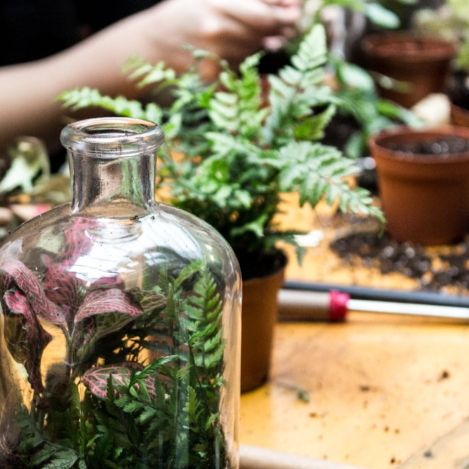 Terrarium_Workshop_GeoFleur