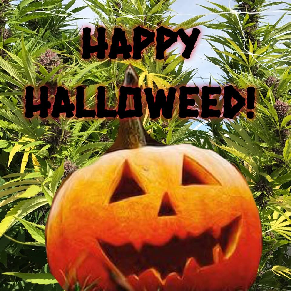 Happy Halloweed! Stop by The Green Door today in costume and receive a discount with your purchase.