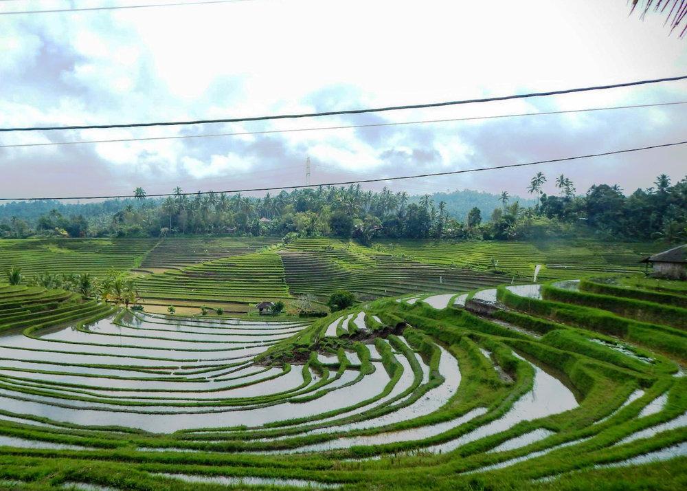 Bali_RiceTerraces_Mere.jpg