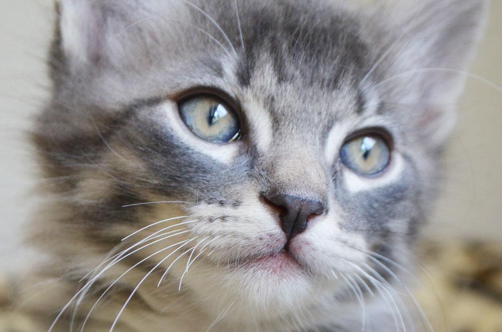 kitten theartmuse