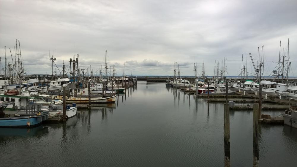 Marina in Westport, WA