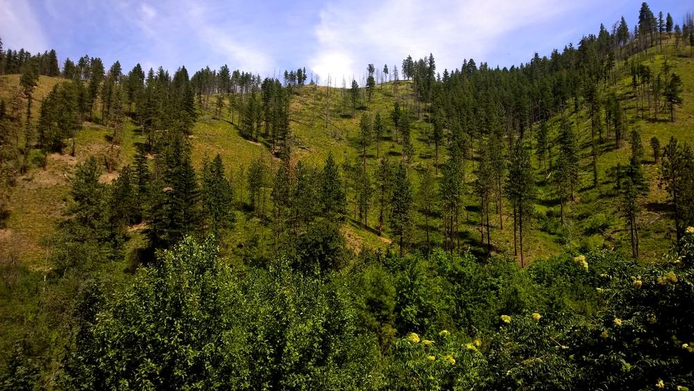 The hills are alive... - Leavenworth, WA