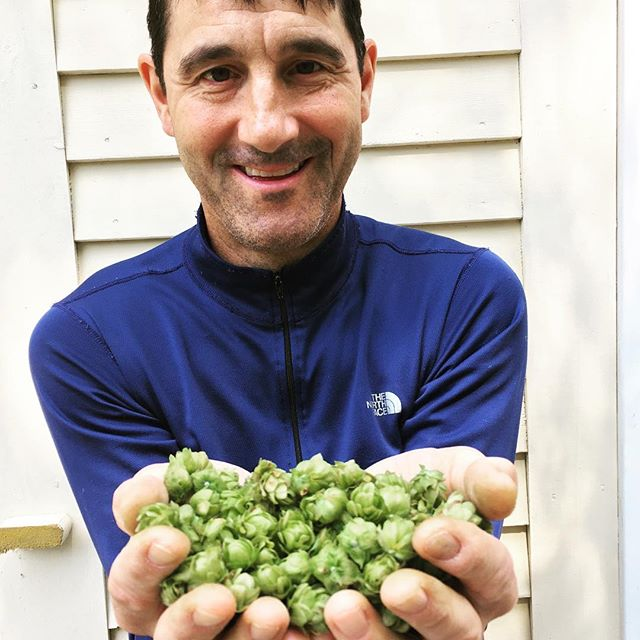 Hop harvest at our house (this plus 10 ounces). Chris is verrrrryyy happy. He plans to brew this fall! #hoppybeer