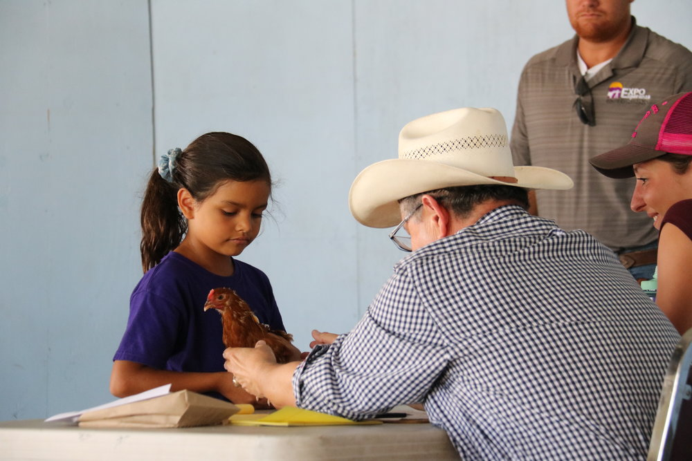 Chicken projects are cared for by the participants for 4 weeks prior to Expo Esperanza. The project has 2 classes,production and showmanship, and is open to all age groups. There is especially a lot of enthusiasm with the Beginners!
