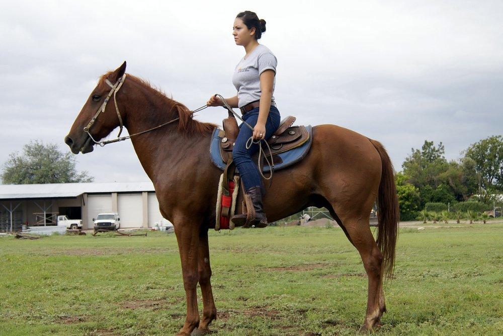 EE12 horse9.JPG