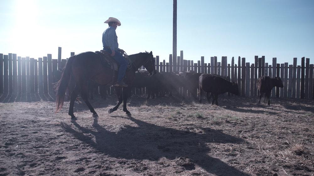 ranching5.jpg