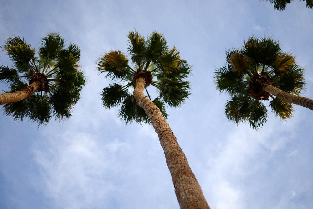 Palm Springs 25.jpg