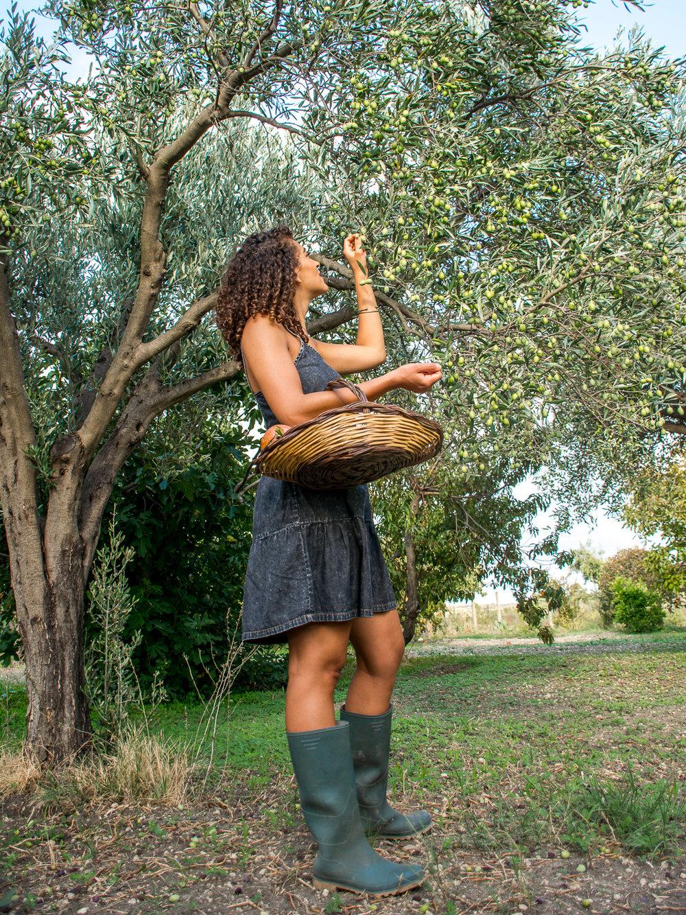 exau-olive-trees-12.jpg