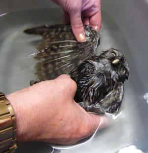 """… but """"I hope that's the LAST bath I'll need!"""""""