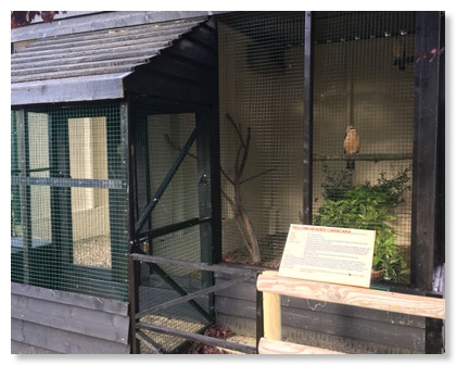 Aviaries for our display birds are spacious and apposite to their needs