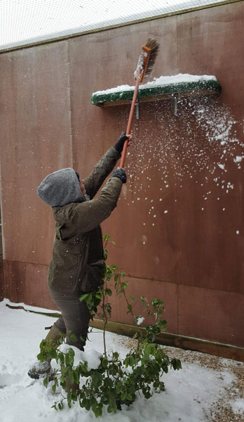 The long arm of the falconer, brushing the snow from one of the high ledges in the Red Kite aviary