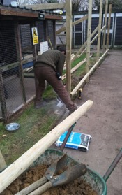 Head Falconer Matt gets down & dirty as  he concretes in the new barrier supports