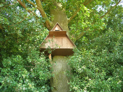 A Barn Owl nest box sited high in a tree, out of harms way