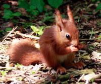 squirrel-3.jpg