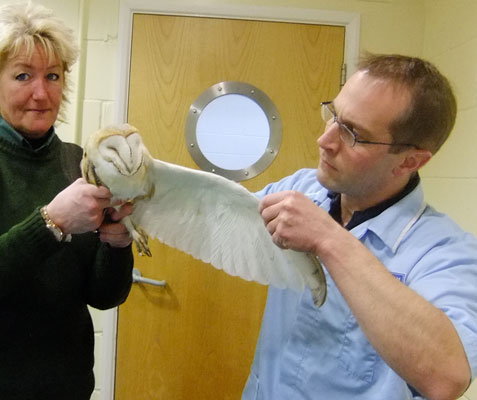 For more serious cases, Paul Canham from the local veterinary practice is called upon to carefully examine birds to determine the likely cause of a problem and then operate as appropriate. Our General Manager Maz lends a hand...