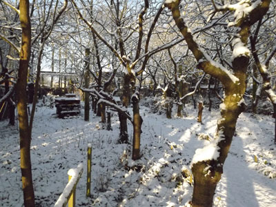 woodland-walk-in-snow.jpg