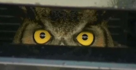 owl-under-bonnet.jpg