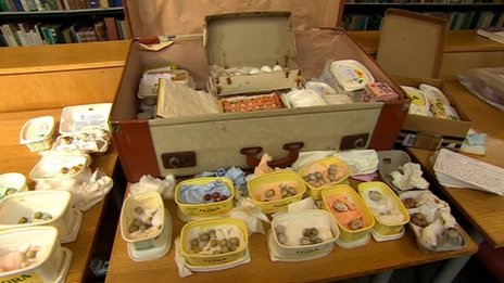 The haul of illegally collected eggs stored in margarine boxes   in a suitcases in the loft of the culprit