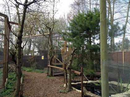 The three large squirrel enclosures allow plenty of space for recreation and seclusion