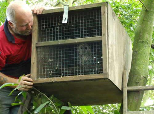 A local farmer, Francis, allows us to hack recuperated birds back from his land and even helped us in the task of releasing a couple of tawnies this week...