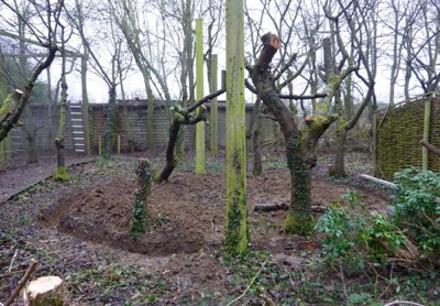 Head Falconer Matt has been hard at it creating   the foundations for a new Red Squirrel pen   to house our expanding colony, some   of which are donated to controlled wildlife   release programmes in Wales