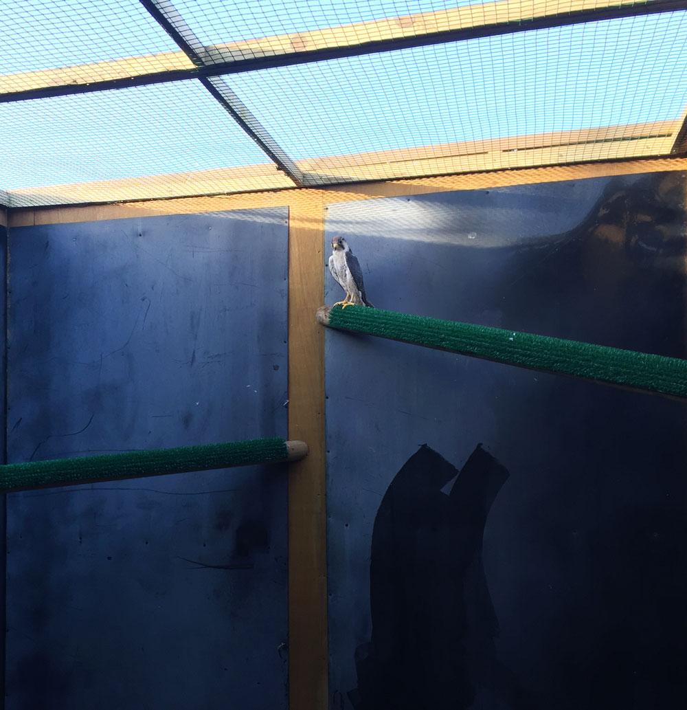 Large bird rehab aviary