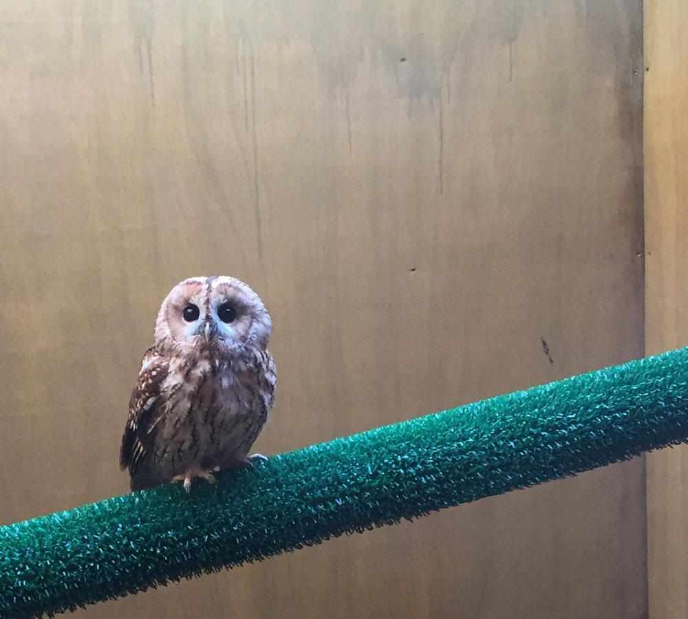 Pre-release aviary