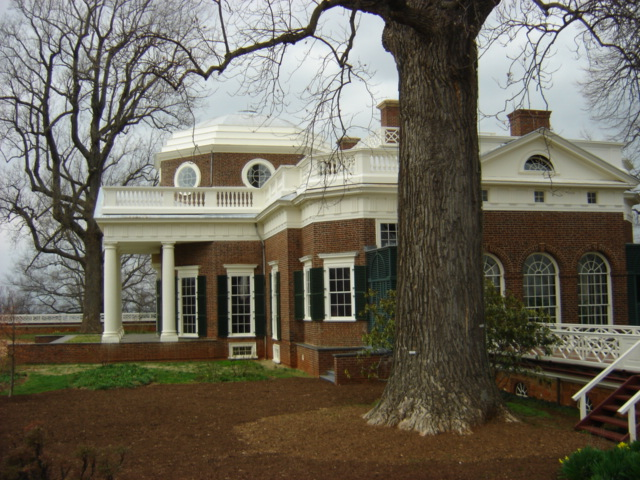 Tulip Poplar at Monticello