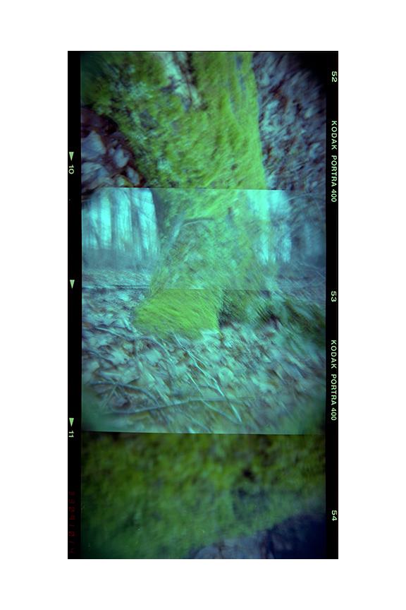 Trips (2013)  120mm FujiFilm Pro 400H