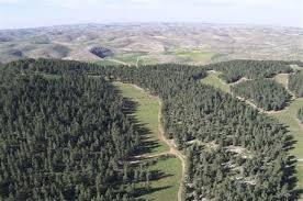 yatir forest