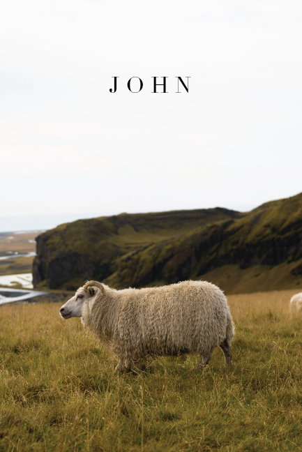 john - sheep.png