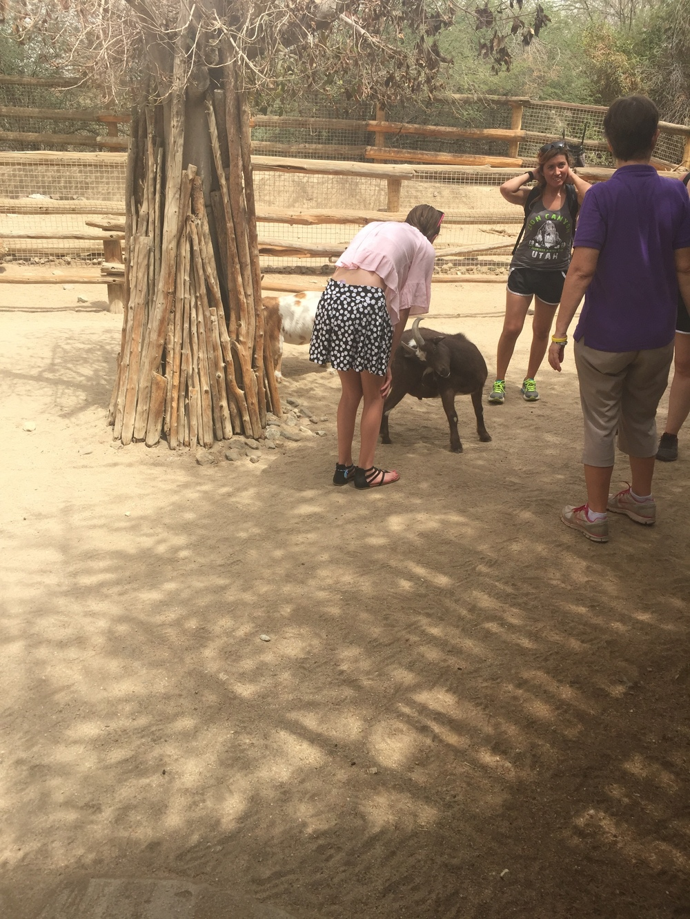 Petting goats at the Living Desert Zoo