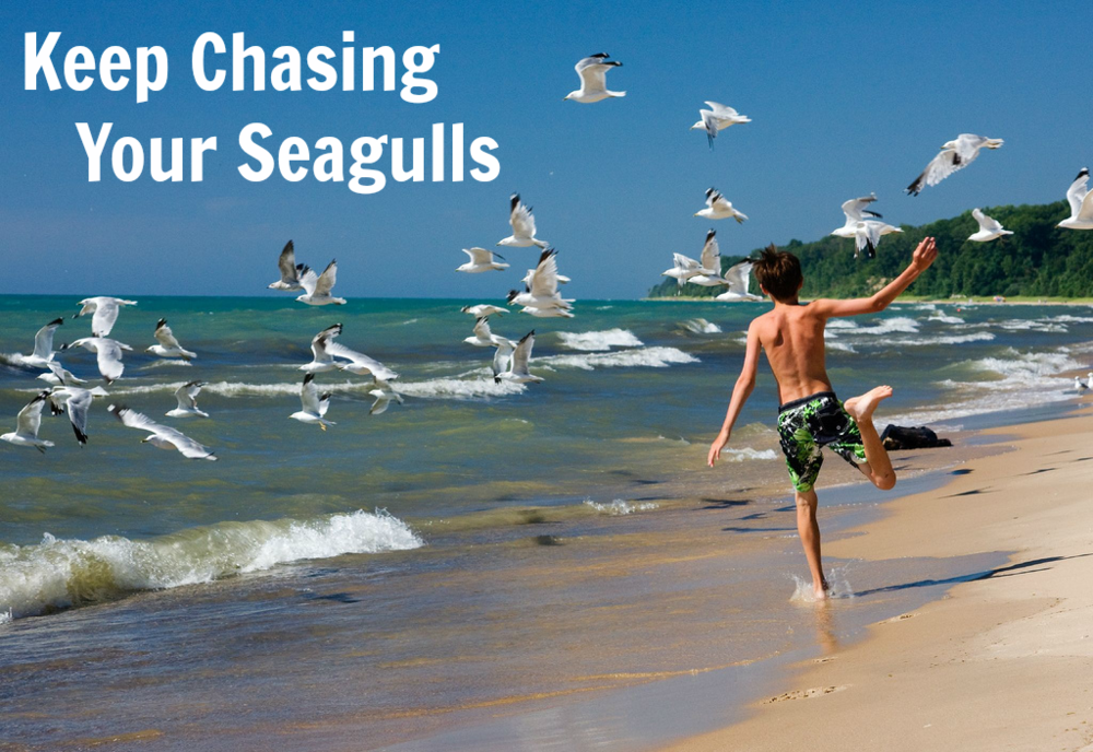 chasing_seagulls.png