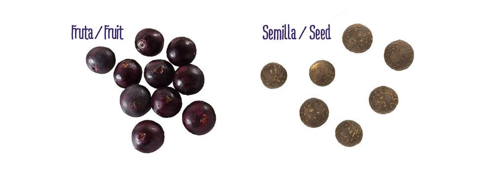 fruta-versus-semilla.jpg