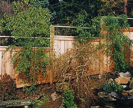 fence07.jpg
