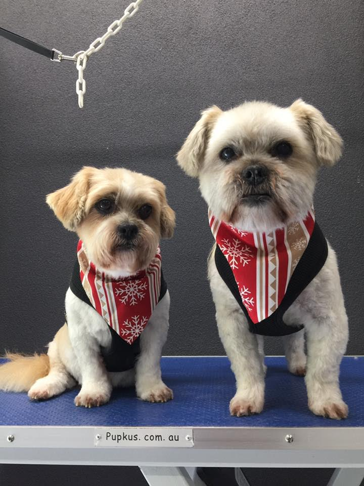 14 year olds Jay Jay and coco with their new cuts