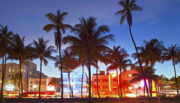 miami-palm-trees.jpg