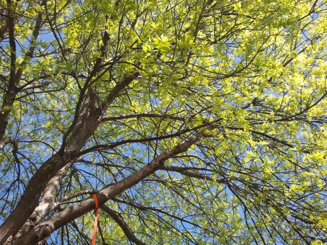 cover tree.jpg
