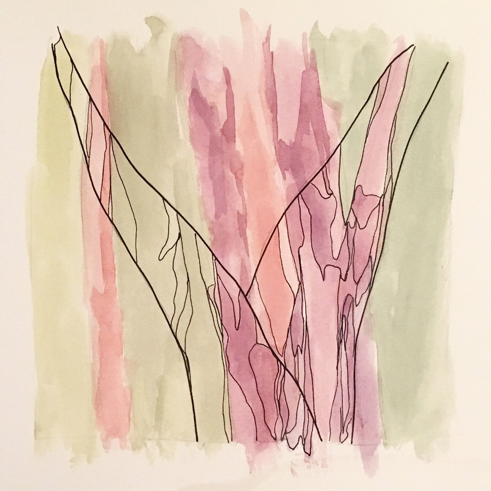 Sketch 7 watercolour on paper with pen and ink outline angophora trees