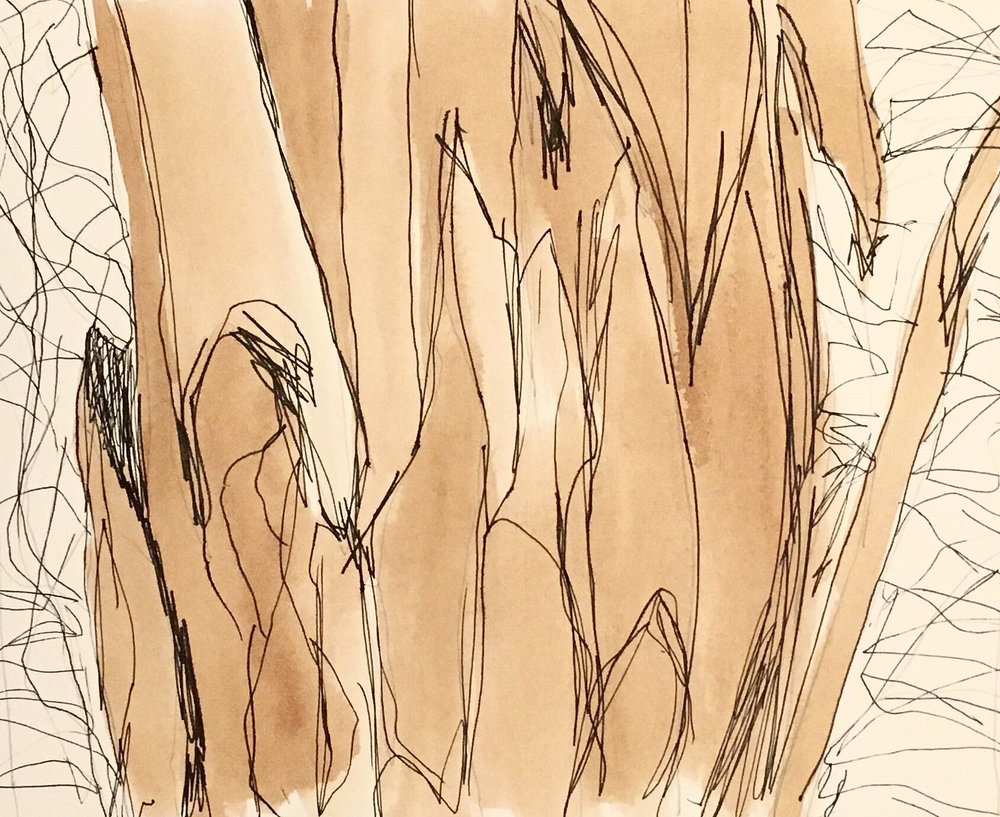 Sketch 10 scribbly gum pen and ink on paper