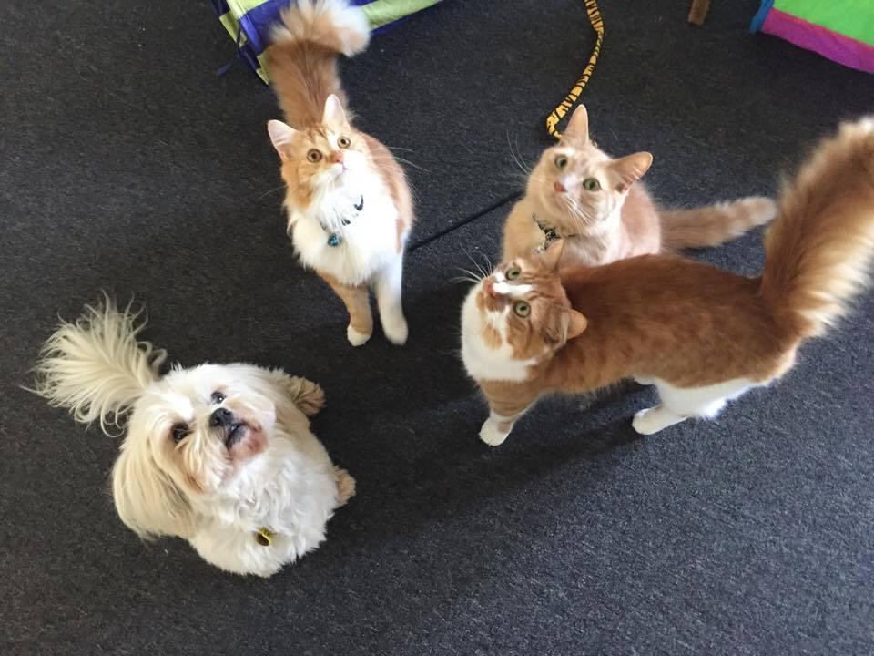 Ollie, Daisy, Chester, Memphis