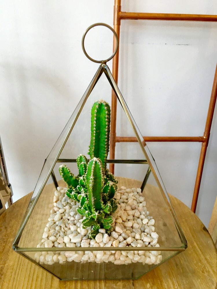 Focus Plant The Little Glass Slipper