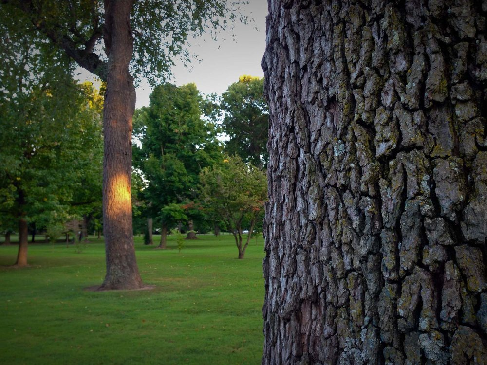 Phelps-Grove-park-trees-are-good-1.jpg