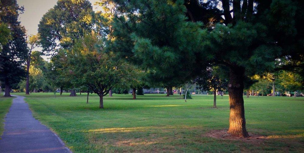 phelps-grove-park-summer-2016.jpg