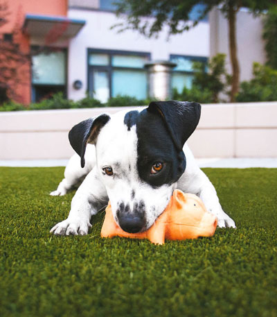 Let The Dog Out – Dog Care On Demand